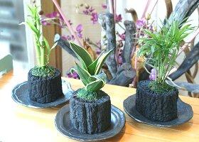 炭花壇 観葉植物