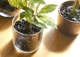 炭花壇 ハイドロチャコール